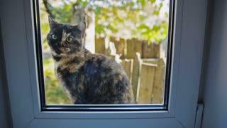 Cat Outside the Window