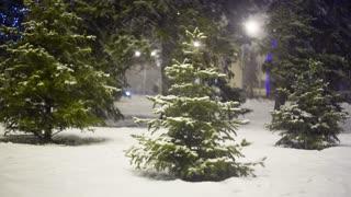 Christmass tree at evening city