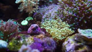 Colorful Underwater plants