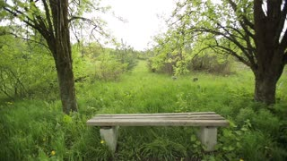 Empty Bench in an Abandoned Park