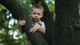 Happy boy climbed on a tree
