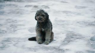 Homeless Dog at Winter