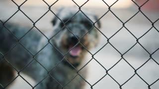 Homeless Dog Behind bars