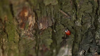 Lady Bug On a Tree