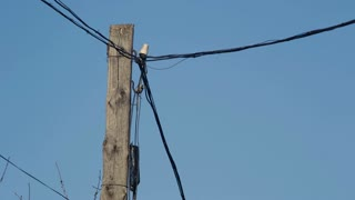 Old Electricity Wires