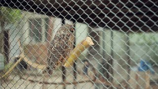 Owl In A Cage at the zoo