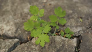 Plant growing through the cracks of the asphalt road