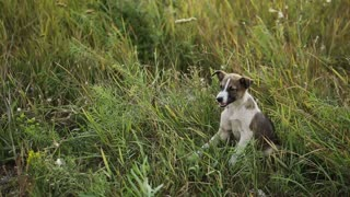 Puppy at the Grass