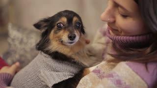 Small dog loves mistress