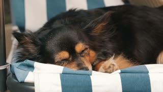 Small dog sleeping on the swing