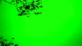 Strong Wind Blowing on Tree Chroma Key