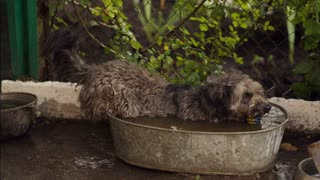 The dog bathes in a tub