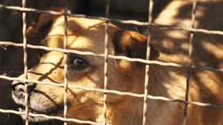 Angry Dog Behind Bars
