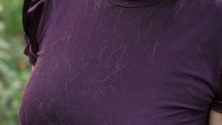Animan hair on clothes