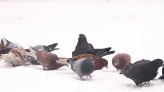 Birds feeding at winter