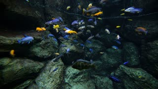 Colored reef fishes