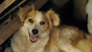 Dog lies at ruined house