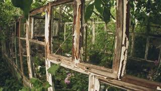 Frame of abandoned old greenhouse