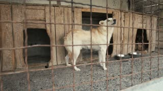 Frightened Dog in the Cattery