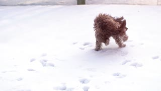 Funny Dog Playing and Jumping