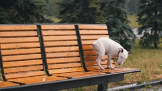 Lost Dog Under Rain