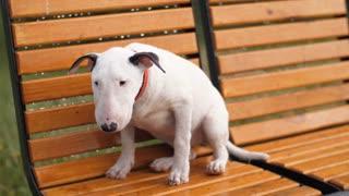 Lost Sad Puppy under rain