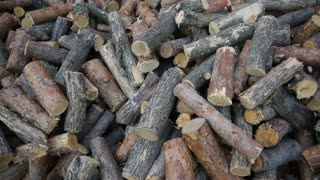 Pile of wood logs on the ground