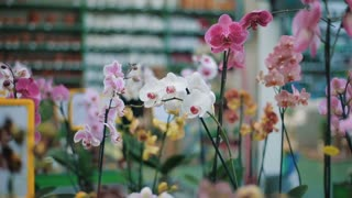 Potted orchid in floral department