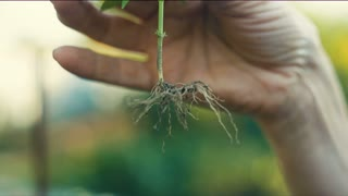 Root of a plant in a hand
