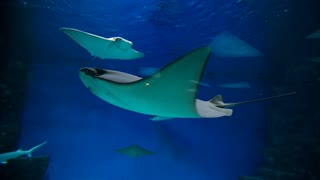 stingrays at oceanarium