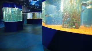 Woman watch Fishes at oceanarium