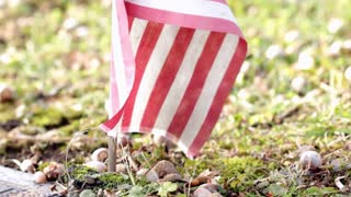 American flag in ground nature background