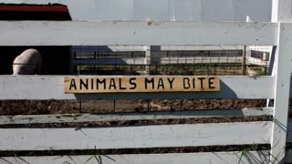 Animals may bite sign on pig pen