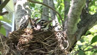 Baby birds in tree nest outdoors