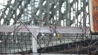 Barbwire fence with bridge in background 4k