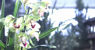 Beautiful Orchid flowers with bright sunshine on them 4k
