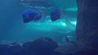 Beautiful Underwater Scene with Shark