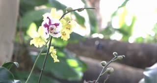 Beautiful White Orchid  growing in nature 4k