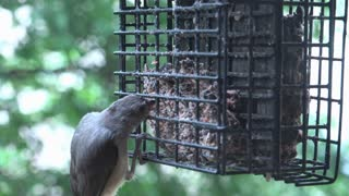 Bird feeder being used by wild life 4k