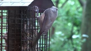 Bird hanging from feeder flies away 4k