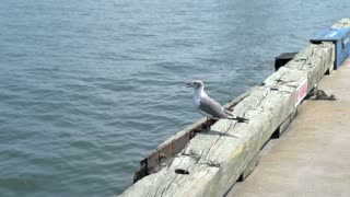 Bird on sea shore takes off in slow motion