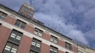 Birds flying from top of building slow motion