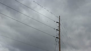 Birds on a wire with storm clouds in back
