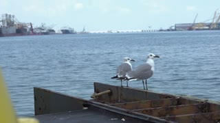Birds sitting on shore with oil rigs in background