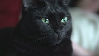 Black cat looking at camera with green eyes