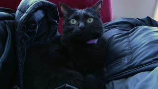 Black Cat sitting on Black Jacket
