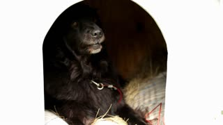 Black dog sitting in door opening