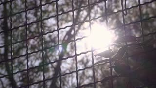 Bright sunshine light coming through trees and metal fence 4k
