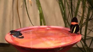 Butterfly feeding station outside in sunshine 4k