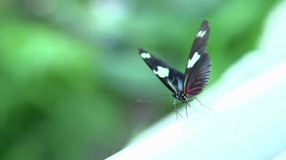 Butterfly flapping wings in slow motion